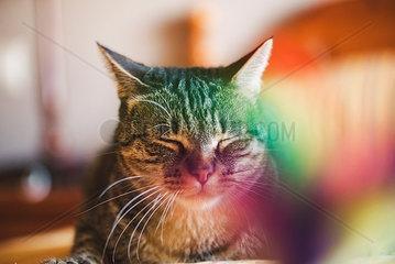 Portrait of snoozing cat