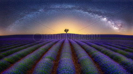 France  Alpes-de-Haute-Provence  Valensole  lavender field under milky way