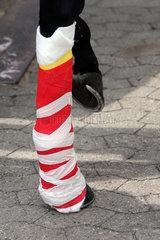 Hannover  Deutschland  Notfallverband an einem Pferdebein nach einer im Rennen erlittenen Beinverletzung