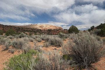 Scenic desert landscape  Utah  USA