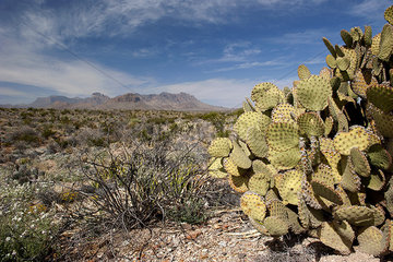 Scenic desert landscape  Big Bend National Park  Texas  USA