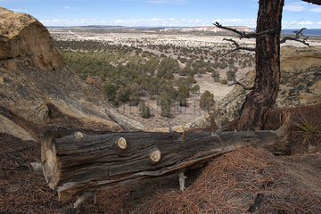 Fallen tree trunk overlooking arid landscape in New Mexico  USA
