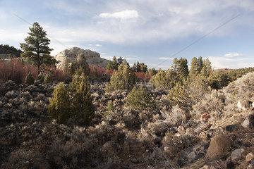 Vegetation grows in a desert landscape in Utah  USA