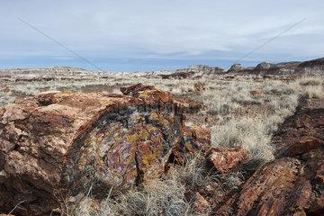 Petrified Forest National Park  Arizona  USA