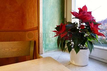 Weihnachtsstern im Vollwertrestaurant