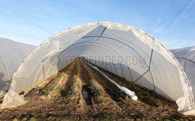 Erdbeerfelder unter Foliengewaechshaeusern