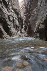 River running through canyon in Zion National Park  Utah  USA