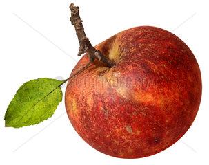 Apfel  Bioapfel