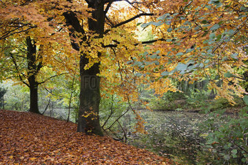 Autumn leaves on trees at water's edge