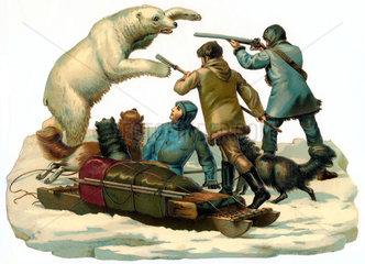 Eisbaerenjagd  Illustration  um 1895
