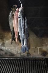 mediterranische Fische
