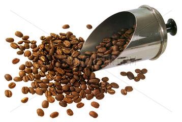 Kaffeebohnen  Kaffeeschuette