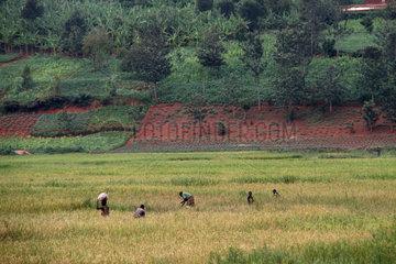 BURUNDI-KIRUNDO TOWN-CHINA-FARMLAND