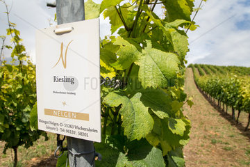Wackernheim  Deutschland  Weingut in Rheinland-Pfalz