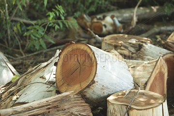 Pile of cut wood