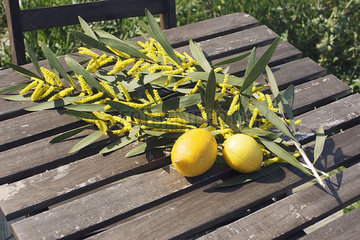 Fresh lemons and cut branches of Sydney golden wattle (Acacia longifolia)