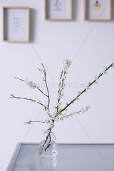 Cut cherry branches in vase