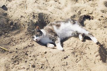 Cat lying in sand