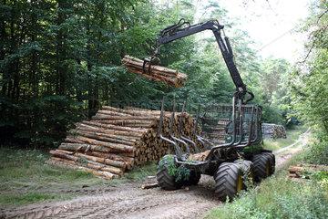 Neukloster  Deutschland  Baumstaemme werden auf einen Anhaenger geladen