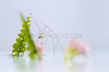 Delicate spider  close-up