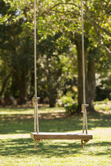 Tree swing in backyard