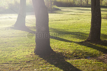 Trees casting shadows on grass
