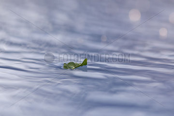 Leaf floating on rippled water surface