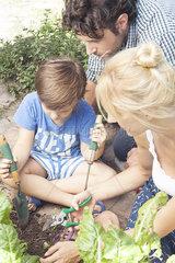 Little boy helping his parents work in vegetable garden