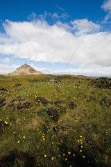 Peaceful countryside  Hellnar  Iceland