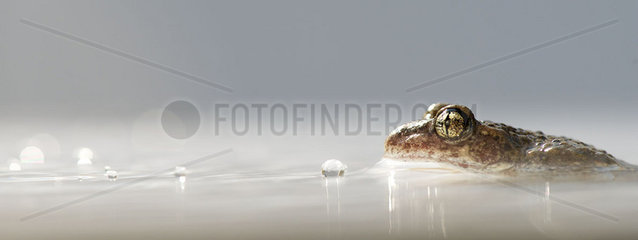 Toad half-submerged in water