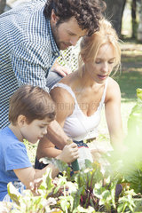 Family working in vegetable garden