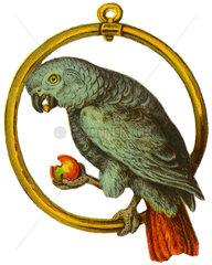Papagei  Poesiebild  1895