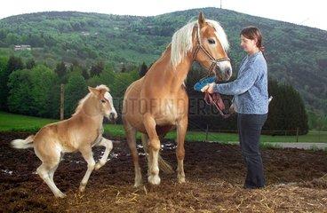 Pferdezucht im Bayerischen Wald