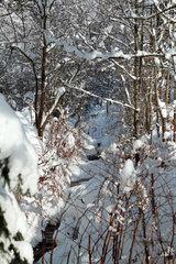 Afritz am See  Oesterreich  zugeschneiter Bergbach im Winter