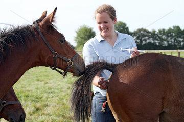 Ascheberg  Deutschland  Pferdewirtin misst Fieber bei einem Fohlen