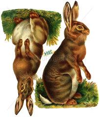 2 Hasen  Maennchen  Weibchen  1925