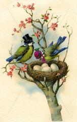 Vogelnest  Humor  1929