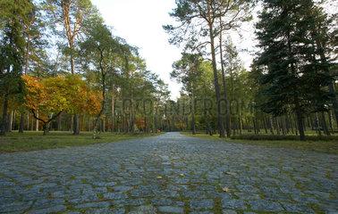 Halbe  Deutschland  Hauptweg auf dem Waldfriedhof