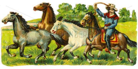 Cowboy faengt Wildpferde mit Lasso  1900