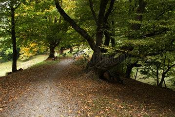 Zuerich  Schweiz  Herbstfaerbung am Resiweiher