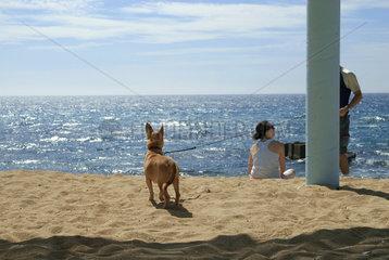 Hund am Strand  Israel