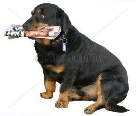 Hund bringt Zeitung