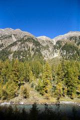 Zaffons  Schweiz  Berghang mit Fichten am Fluss Beverin
