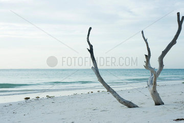 Driftwood sticking up out of the sand at the beach