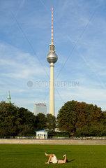 Berlin  Deutschland  Blick vom Schlossplatz auf den Berliner Fernsehturm