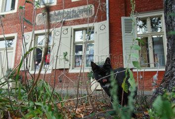 Potsdam  Deutschland  frei laufende Katze im Hollaendischen Viertel