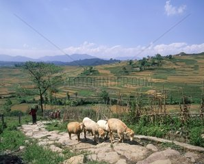 Nepal  farm in the Katmandu valley
