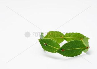 Circle of laurel leaves