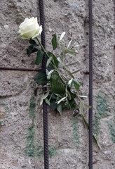 Berlin  Deutschland  Weisse Rose zum Gedenken an die Opfer der deutschen Teilung an der Gedenkstaette Berliner Mauer