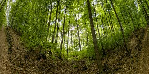 Waldweg bei Hoexter  Weserbergland